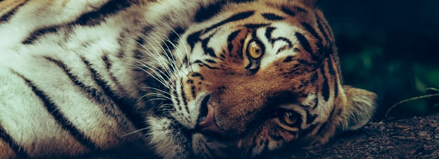 """""""Eye Of The Tiger"""""""
